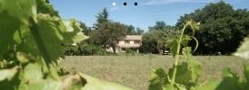 Domaine Goûts de Provence (3 gîtes)